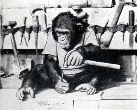 monkey making fine dulcimers without opposable thumbs