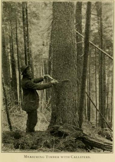 Measuring Timber With Calipers