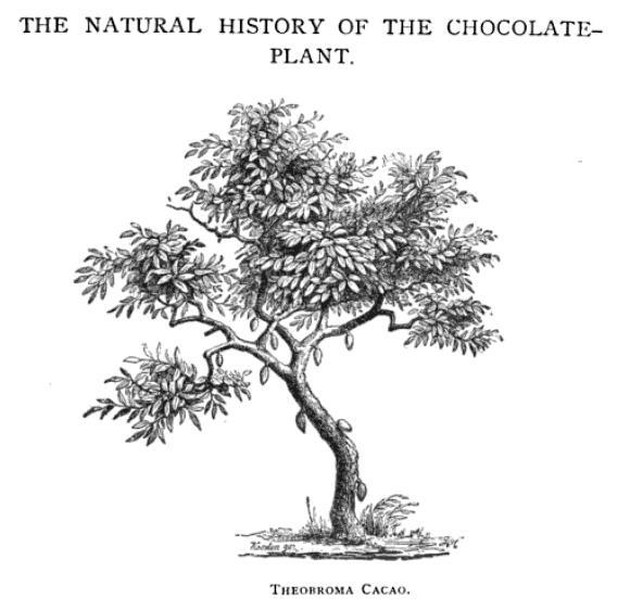 Maybe someday I'll make a dulcimer out of a chocolate tree!