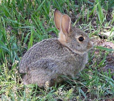 Rabbet, not rabbit!